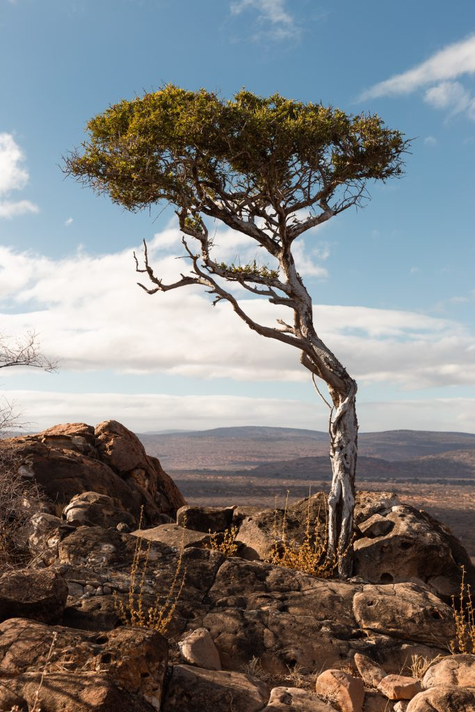 acacia tree on a mountain in Africa