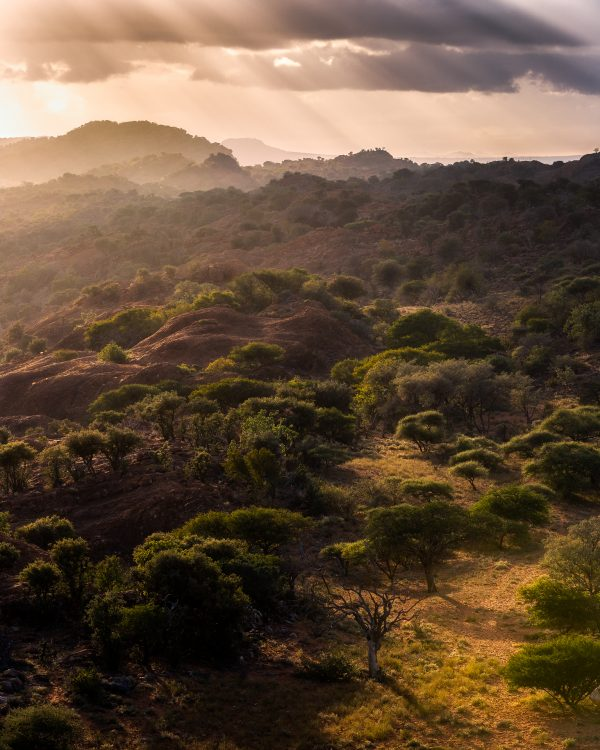 early morning light over African hills and Savanah